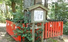 日枝神社 縁むすびの御神木