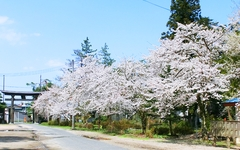 日枝神社 参道